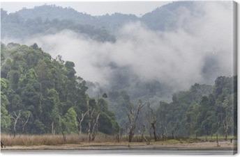Tableau sur toile Brouillard Matin et arbres morts dans la forêt tropicale dense, Perak, Malaisie