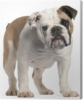Bien-aimée Tableaux sur toile Bulldog anglais • Pixers® - Nous vivons pour &RB_62