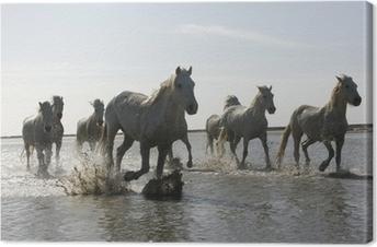 Tableau sur toile Camargue cheval blanc