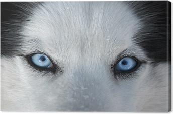 Tableau sur Toile Ces yeux bleus en face ...