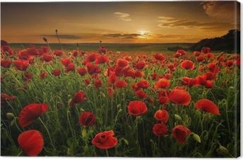Tableau sur toile Champ de coquelicots au coucher du soleil