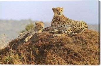 Tableau sur toile Cheetahs sur le Masai Mara en Afrique