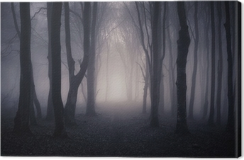 Tableau sur toile Chemin à travers une forêt sombre la nuit