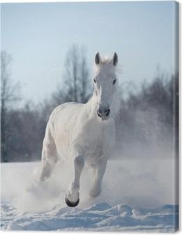 Tableau sur toile Cheval d'hiver