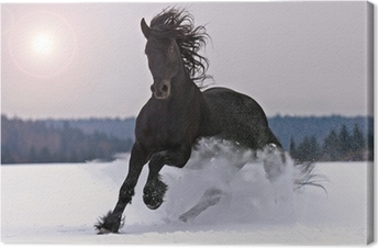 Tableau sur Toile Cheval frison sur la neige