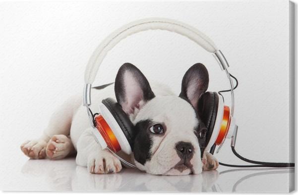 tableau sur toile chien couter de la musique avec un casque isol sur blanc backgro pixers. Black Bedroom Furniture Sets. Home Design Ideas