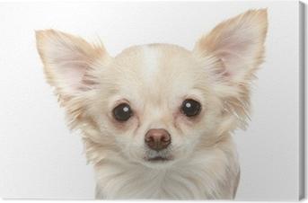 ff2345a7be39b Tableau sur toile Chihuahua chiot drôle • Pixers® - Nous vivons pour ...