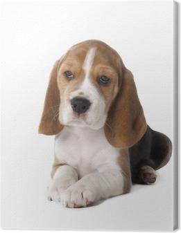 Tableau sur toile Chiot beagle