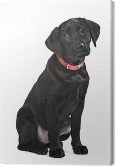 Tableau sur toile Chiot labrador noir