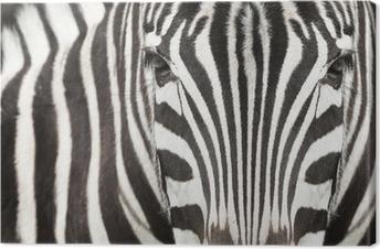 Tableau sur toile Close-up de la tête et du corps de zèbre avec un beau motif rayé