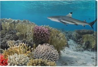 Tableau sur toile Coloré récif de corail sous l'eau avec des poissons dépouillé jaune et grand