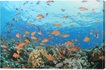 Tableau sur toile Coral Reef Underwater