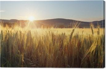 Tableau sur toile Coucher de soleil sur un champ de blé