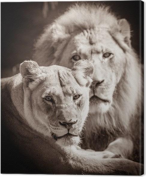 tableau sur toile couple du lion pixers nous vivons pour changer. Black Bedroom Furniture Sets. Home Design Ideas