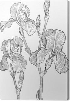 Tableau sur toile Croquis du bouquet d'iris en fleurs