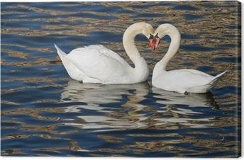 Tableau sur toile Cygnes romantiques au printemps.