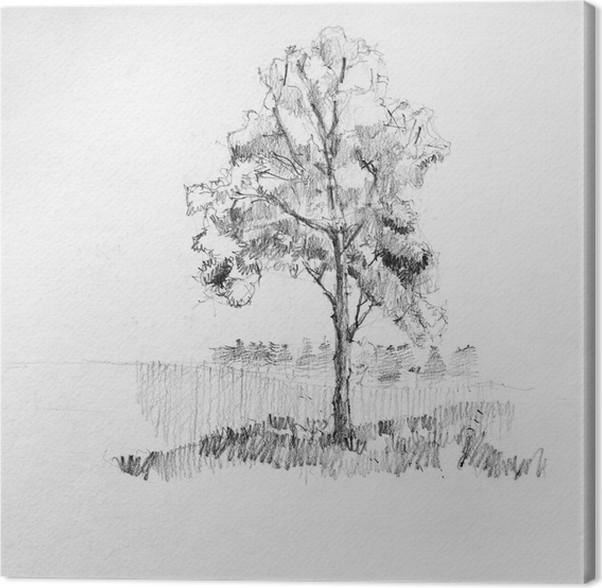 tableau sur toile dessin la main croquis de l 39 arbre par le crayon sur un papier blanc pixers. Black Bedroom Furniture Sets. Home Design Ideas