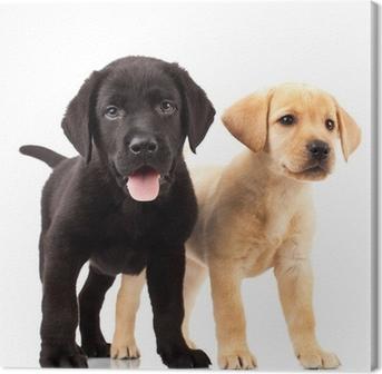 Tableau sur Toile Deux adorables chiots labrador