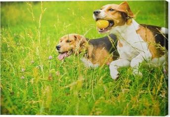 Tableau sur toile Deux beagle