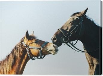 Tableau sur toile Deux chevaux de race sur fond de ciel bleu