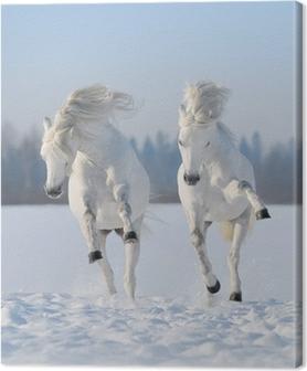 Tableau sur toile Deux galop des chevaux blancs comme neige