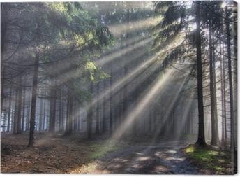 Tableau sur toile Dieu poutres - forêt de conifères dans le brouillard