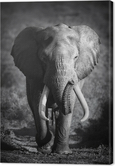 Tableau sur Toile Elephant Bull (traitement artistique)