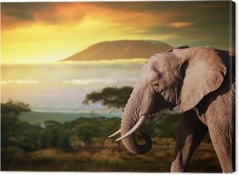 Tableau sur toile Elephant sur la savane. Mont Kilimandjaro au coucher du soleil. Safari