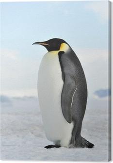 Tableau sur toile Empereur pingouin