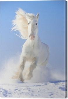 Tableau sur toile Étalon blanc de chevaux galopent au point avant