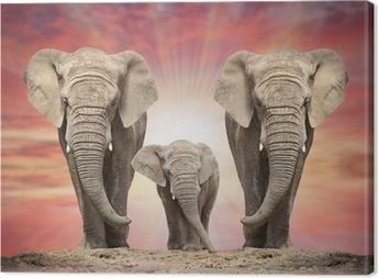 Tableau sur toile Famille de l'éléphant d'Afrique sur la route.