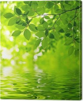 Tableau sur toile Feuilles vertes