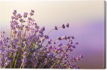 Tableau sur Toile Fleurs de lavande fleurissent l'heure d'été