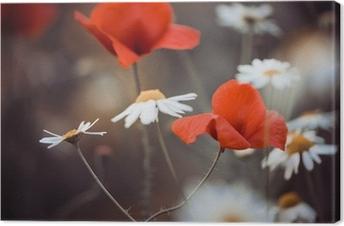 Tableau sur toile Fleurs de pavot rouges et de marguerites sauvages