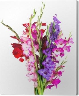 Tableau sur toile Fleurs multicolores glaïeul