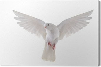 Tableau sur toile Flying dove