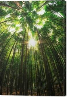 Tableau sur toile Forêt de bambous en Damyang, Corée du Sud.