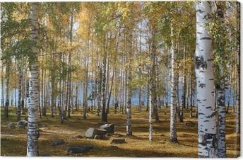 Tableau sur toile Forêt de bouleaux en automne