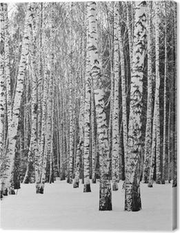 Tableau sur toile Forêt de bouleaux en hiver en noir et blanc