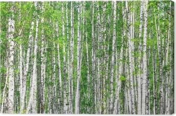 Tableau sur toile Forêt de bouleaux. Mai