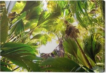 Tableau sur toile Forêt tropicale dans la Vallée de Mai, Praslin, Seychelles