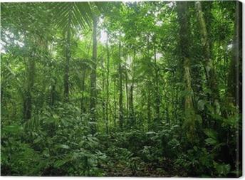 Tableau sur toile Forêt tropicale Paysage, Amazon