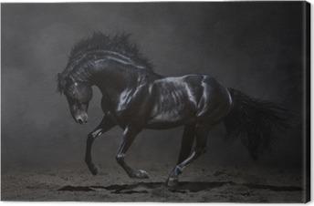 Tableau sur toile Galopant cheval noir sur fond sombre