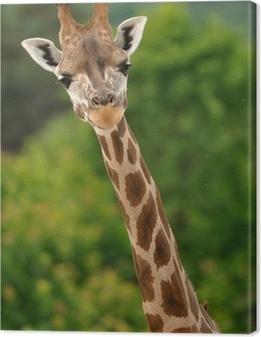 Tableau sur toile Giraffe tête avec le cou