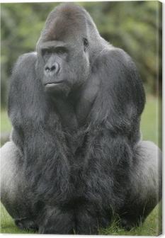 Tableau sur toile Gorille de plaine occidental, Gorilla gorilla