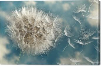 Tableau sur toile Graines de pissenlit perdre dans le vent