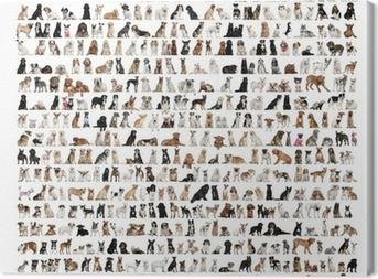 Tableau sur toile Grand groupe des races de chien devant un fond blanc