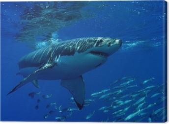 Tableau sur toile Grand requin blanc