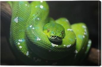 Tableau sur toile Green snake