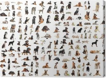 Tableau sur toile Groupe de chiens de race